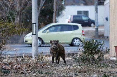 Lon rung nhiem xa tran ngap duong pho Fukushima - Anh 1