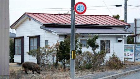 Lon rung nhiem xa tran ngap duong pho Fukushima - Anh 2