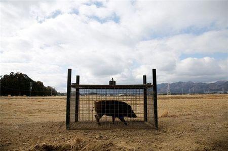 Lon rung nhiem xa tran ngap duong pho Fukushima - Anh 4