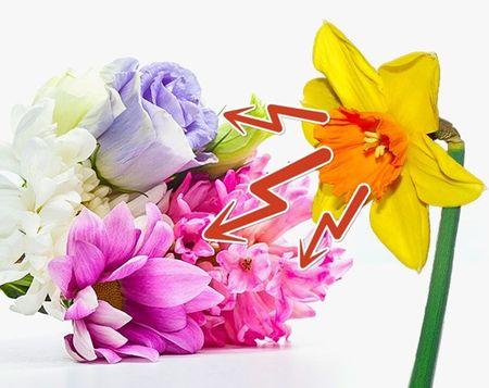 10 meo hay giu hoa tuoi lau chi em nen biet - Anh 10