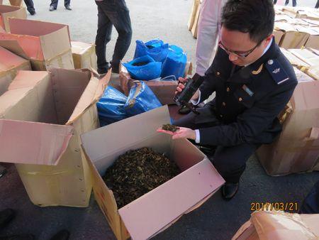 Hai Phong: Bat giu 2,8 tan la Khat doc hai gap 500 lan ma tuy - Anh 2