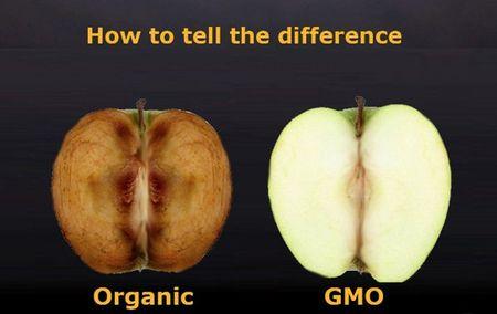 5 dieu bi mat ma 'ong trum' Monsanto khong cho ban biet - Anh 2