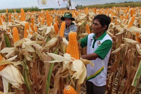 5 dieu bi mat ma 'ong trum' Monsanto khong cho ban biet - Anh 4