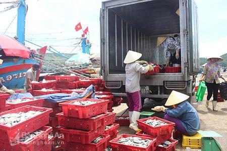 San pham tom ca Nghe An chua vao duoc thi truong kho tinh - Anh 1