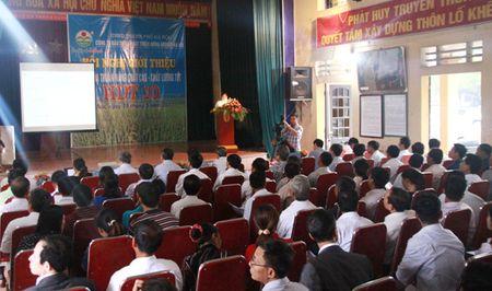 Giong lua thom HDT10 cho nang suat 8 tan/ha - Anh 1