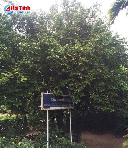 Tham Khu luu niem Bac Ho tai Nakhon Phanom - Anh 5