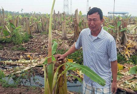 Vu pha nat vuon chuoi tien ty o Hai Phong: Hoi Nong dan len tieng - Anh 3