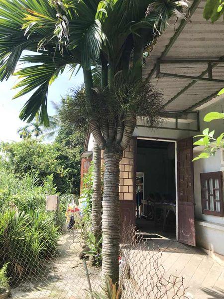 Can canh: Cay cau 'quai vat' 6 ngon, 2 buong - Anh 1