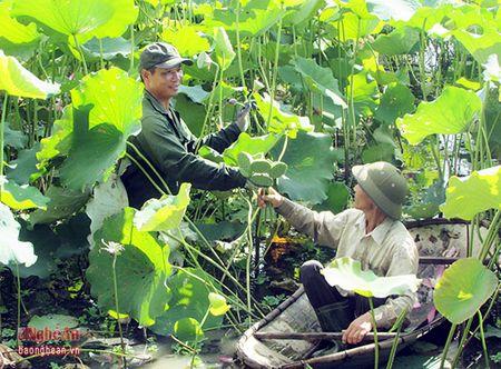 Yen Thanh nao nuc huong toi 'Ngay hoi hoa sen' - Anh 1