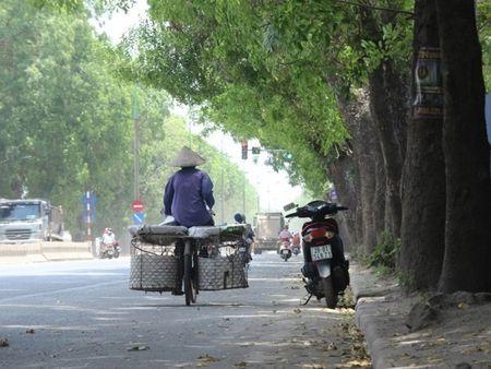 Ong Nguyen Duc Chung noi ve vu chat 1.300 cay o Ha Noi - Anh 2