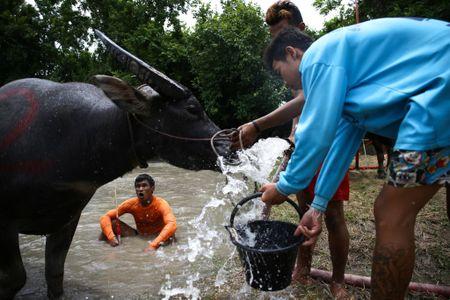 Trau nuoc Thai Lan dua quyet liet trong le hoi truyen thong - Anh 6