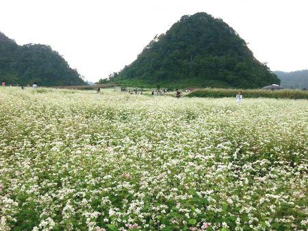 Ha Giang khac phuc nhung ton tai nham day manh phat trien du lich - Anh 1
