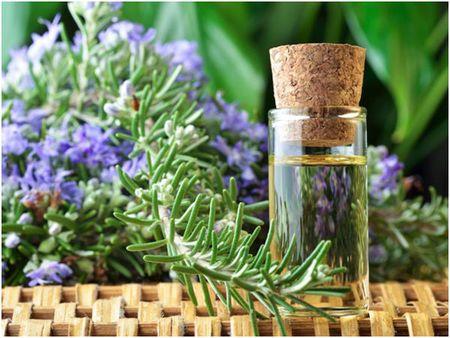 Hoa Oai huong trong lam canh cuc dep lai co the duoi muoi vo cung tot - Anh 2