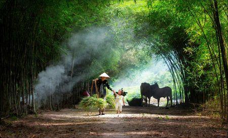 Buc hoa dong que trong 'Dau an Viet Nam' - Anh 1