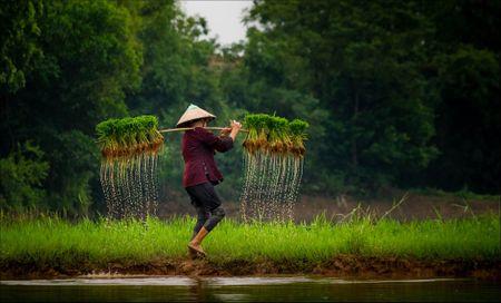 Buc hoa dong que trong 'Dau an Viet Nam' - Anh 5
