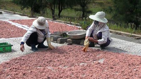 Ngu dan Quang Tri trung dam mua ruoc bien - Anh 1