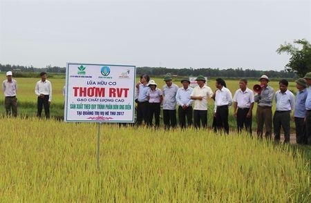 Lua sach huu co Quang Tri, hieu qua da ro - Anh 2