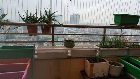 Me Viet khoe vuon rau 4m2 xanh muot mat o hanh lang chung cu - Anh 1