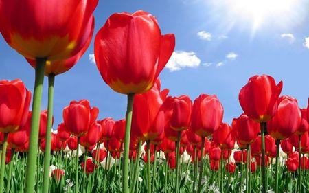 Quiz: Doan ten quoc gia qua quoc hoa - Anh 1