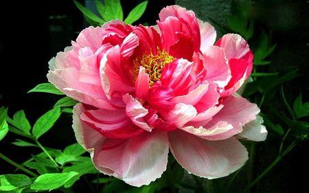 Quiz: Doan ten quoc gia qua quoc hoa - Anh 4