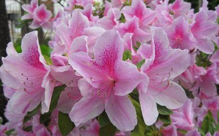 Quiz: Doan ten quoc gia qua quoc hoa - Anh 6