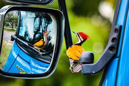 Ngam nhung buc anh thang giai Bird Photographer of the Year 2017 - Anh 12