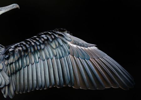 Ngam nhung buc anh thang giai Bird Photographer of the Year 2017 - Anh 4