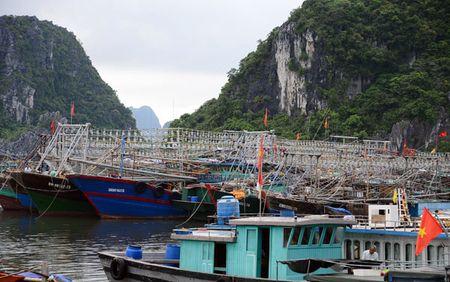 Can canh: Ngu dan Quang Ninh lap thiet bi 'khung' chuan bi ra khoi - Anh 11