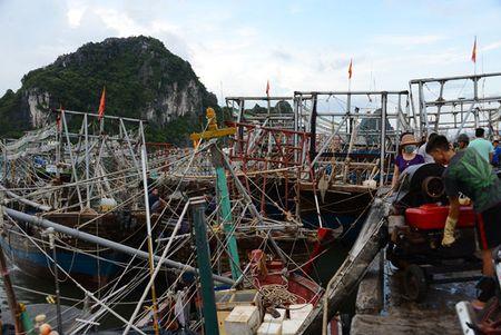 Can canh: Ngu dan Quang Ninh lap thiet bi 'khung' chuan bi ra khoi - Anh 5