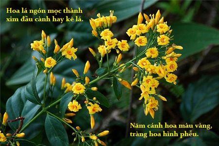 Cay doc: Nhac ten la nguoi Viet so hai, chi can an 3 la cung liet toan than - Anh 1