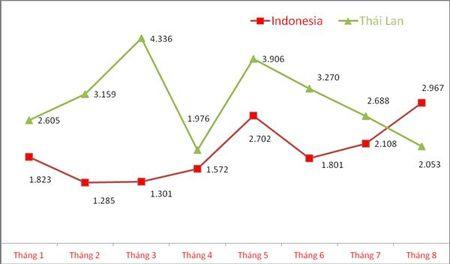 Nhap gan 3.000 xe mot thang, o to xuat xu Indonesia vuot Thai Lan - Anh 1