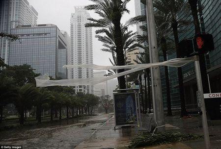 Bao Irma can quet, Tong thong My tuyen bo tham hoa o Florida - Anh 2