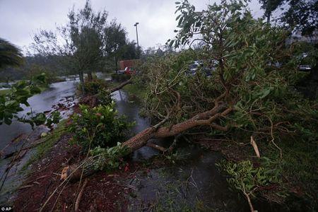 'Quai vat' Irma cuong no khien Florida (My) tan hoang - Anh 3