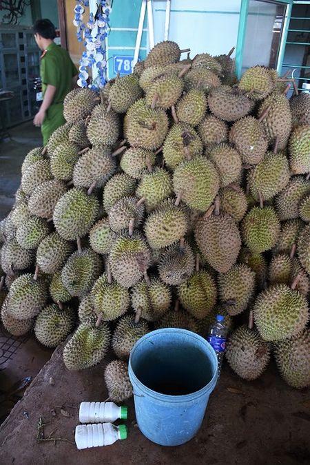 Kon Tum: Su dung hoa chat khong ro nguon goc lam chin sau rieng - Anh 1
