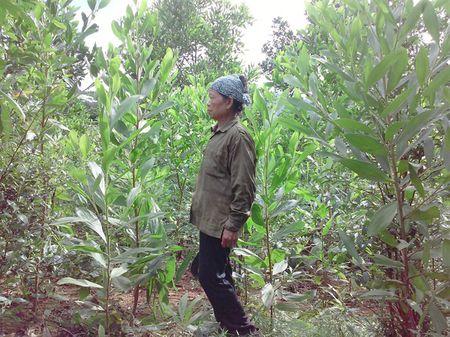 Hang van nguoi dan duoc huong loi tu viec Thanh Hoa 'xe rao' - Anh 1