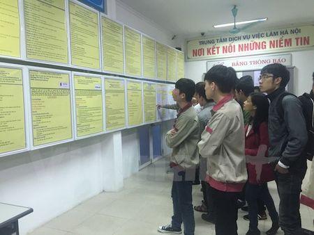 So nguoi that nghiep co trinh do dai hoc tro len tang tro lai - Anh 1