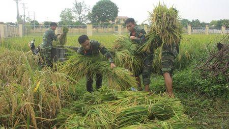 Doan Thanh nien giup dan gat lua, chay bao - Anh 3