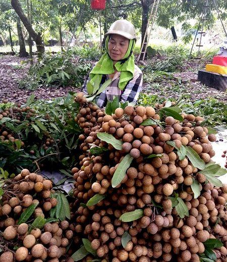 Hung Yen: Nhan long Hung Yen cho nguon thu tren 900 ty dong - Anh 1