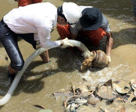 Quang Ngai bao ve co vat chim dam tai cang Dung Quat - Anh 1