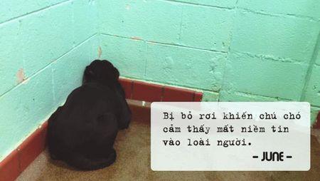 Co the ban khong tin, nhung day chinh la tam trang cua mot chu cho bi bo roi tai trung tam cuu tro dong vat - Anh 1