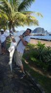 Thực hư chuyện bắt được cá mập trên vịnh Hạ Long