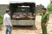 Đồng Nai: Xử lý 20 cơ sở vi phạm kinh doanh giết mổ tại huyện Trảng Bom