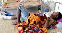 Nghệ An: Lợn rừng tấn công, một người đàn ông bị trọng thương