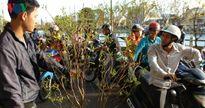 Độc đáo chợ bán mai cảnh bên sông Cà Ty
