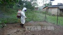 Xử lý ổ dịch cúm gia cầm tại Quảng Trị