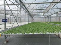 Israel giới thiệu công nghệ nông nghiệp cho Việt Nam