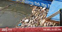 Cá chết trắng kênh Nhiêu Lộc, công nhân môi trường vớt không xuể