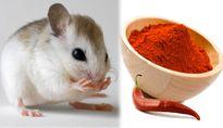 Chỉ bí quyết để nhà bạn không bao giờ có con chuột nào mà chẳng cần thuốc diệt
