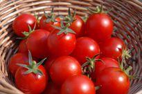 Cách bảo quản cà chua tươi lâu, thơm ngọt nhất