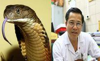 Bác sĩ cảnh báo những điều tuyệt đối không được làm khi bị rắn độc cắn